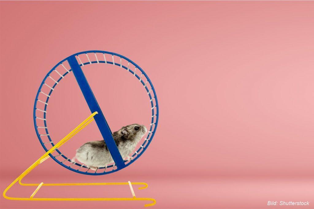 mäuse-im-laufrad