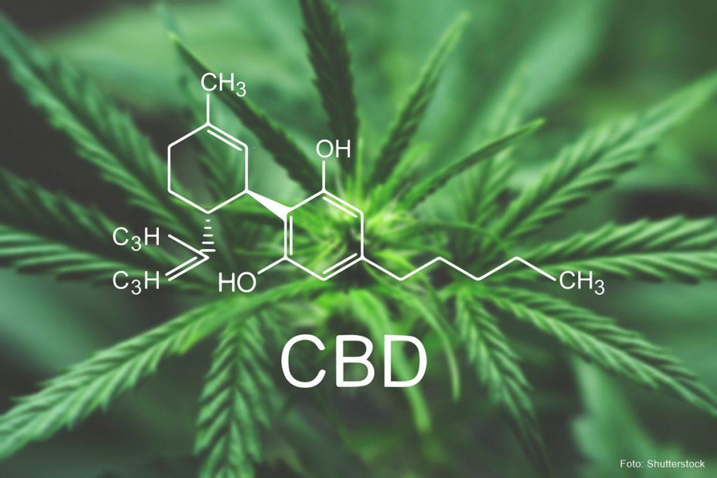 cbd-plant