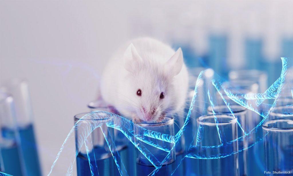 mouse_laboratory